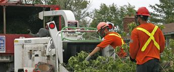 Hydro Ottawa employee trimming a tree in proximity of an overhead wire